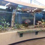 Nicandri Nature Center, Barnhart