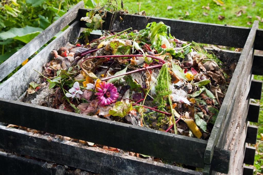 Image result for flowers in compost