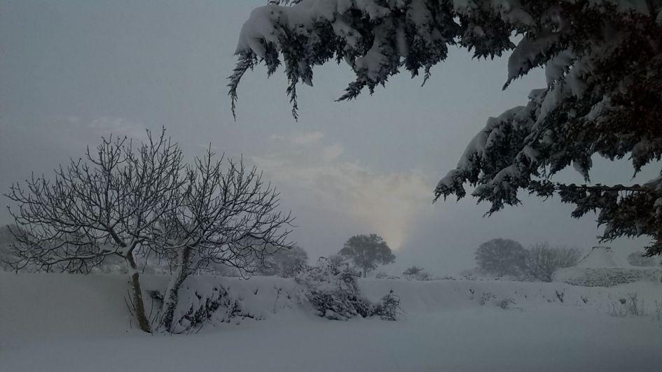 Masseria Dirupo albero neve cover