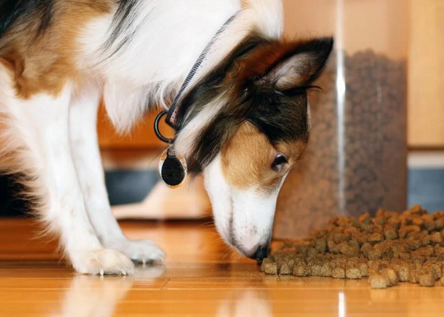 dog-food