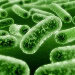 prebiotici