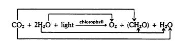 rumus-reaksi-fotosintesis