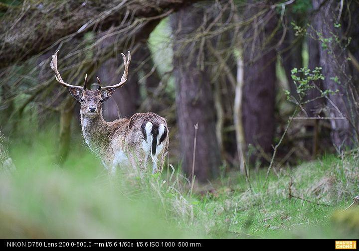Nikon D750 AF-S NIKKOR 200-500mm f/5.6E ED VR - Wildlife