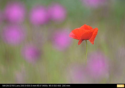 Nikon D750 AF-S NIKKOR 200-500mm f/5.6E ED VR  - Flower