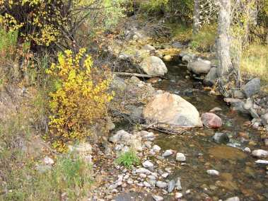 Creek with Trees - Greenhorn Creek
