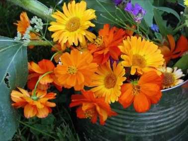 Marigolds & Daisies (1)