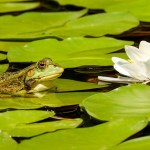 The meaning of the frog and old pond haiku poem by Matsuo Basho