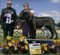 JC & Gloria winning WD and BOW at the Mastifff supported entry  in Trenton, NJ 2007.jpg