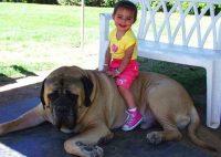 kid-and-mastiff.jpg