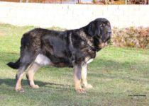 duquesa (15)
