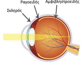 Ανατομία ματιού - Ραγοειδίτιδα