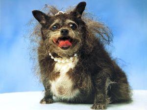 balthazar, the dog of Sheldon Photo credit: Sheldon Speedmeyer