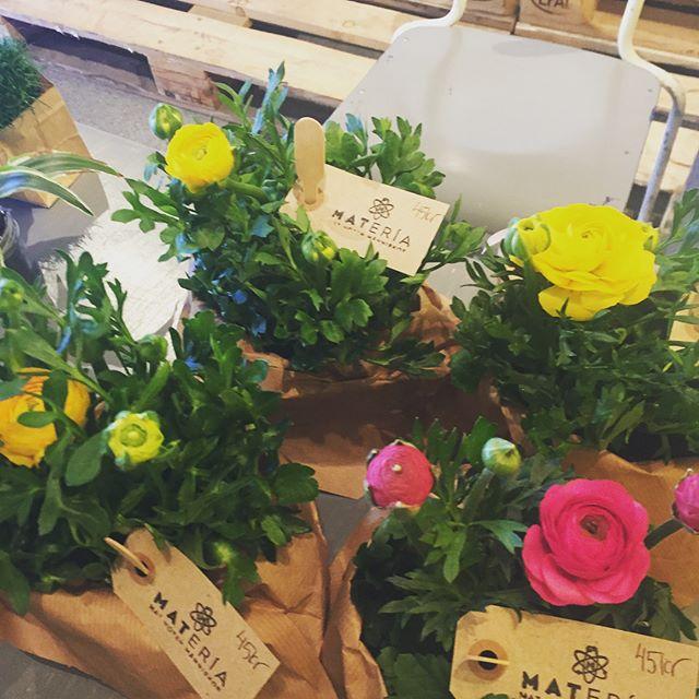 Idag har vi fått påfyllning i våra blomsterhörnor. Härliga porslinsblommor, begonior, monstera och påskblommor