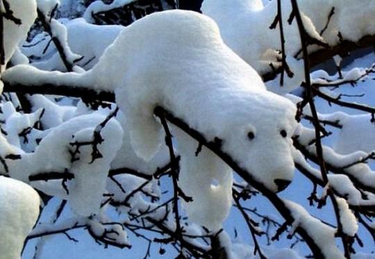Urso Polar de Neve