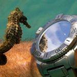 Cavalo-marinho ve reflexo no espelho e o lindo 'sorriso' da foca