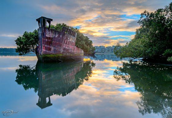 Navios com árvores de manguezal