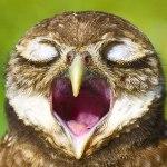 Galeria de imagens com as corujas mais fotogênicas do mundo