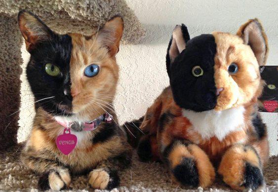 Gatinho bicolor de pelúcia
