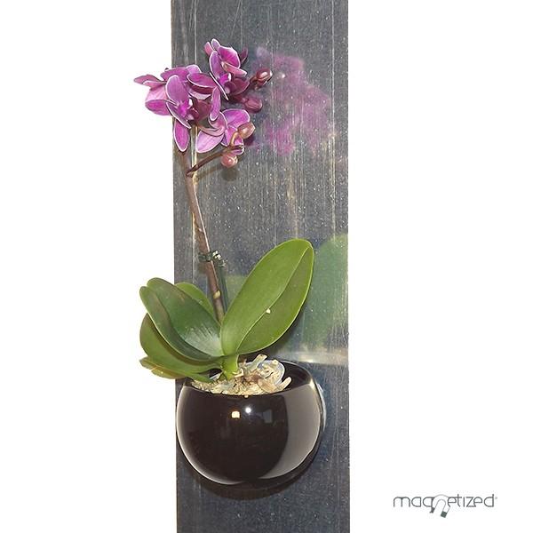 Cache Pot Magntique 8cm Noir Matriel Mur Vgtalfr