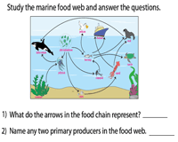 Food Chain Worksheets Ecosystem And The Food Web