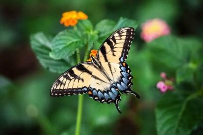 πεταλούδα 1561188147 - Η Λούδα-πεταλούδα