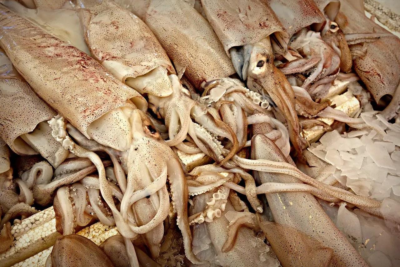 Squides