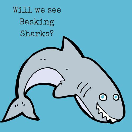 It's a Child's World: Basking Sharks?