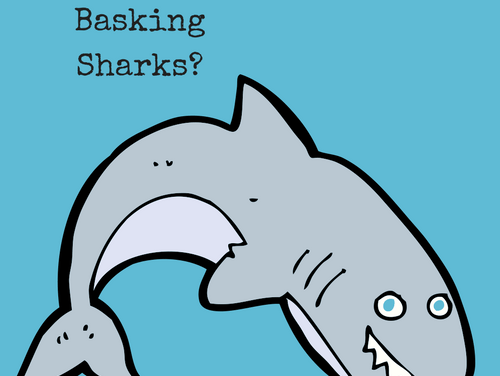 It's a Child's World: Basking Sharks?