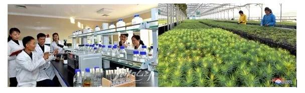 1) L'utilisation des insecticides biologiques