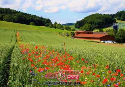 Faixa de flores pode reduzir uso de pesticidas no campo-media-1