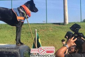 Cão encontrado no lixo ajuda nos resgates de Brumadinho 81