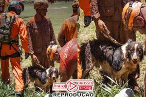 Thor, o cão herói que trabalha em Brumadinho, ganha homenagem 82