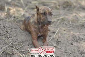 Encontrada família do cão que fez vigília pelos tutores em Brumadinho 80