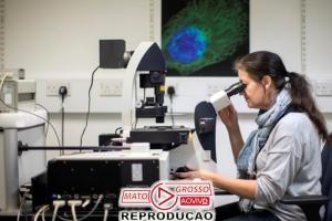 Vacina experimental contra o zika vírus evita microcefalia 68