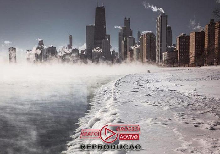 Foto: reprodução / Nature Chicago