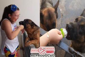 Garota faz picolé de ração pra refrescar cães no interior de São Paulo 61