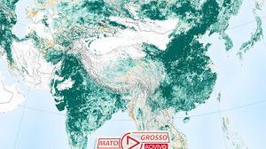 Mundo está mais verde do que há 20 anos graças a 2 países 212