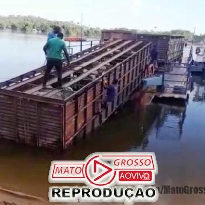 Motorista de caminhão boiadeiro erra na ré e derruba carroceria carregada de cima da balsa no Rio Teles Pires 105