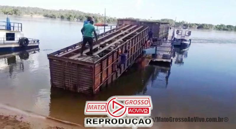 Motorista de caminhão boiadeiro erra na ré e derruba carroceria carregada de cima da balsa no Rio Teles Pires 65