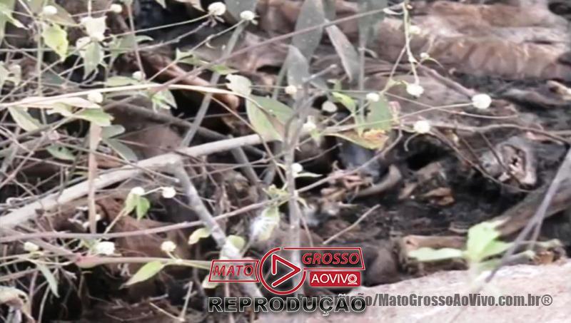 Cemitério de cachorros a beira da estrada e dentro de rio que abastece Alta Floresta, mais de 20 animais foram constatados 73