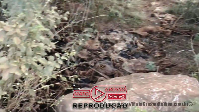 Cemitério de cachorros a beira da estrada e dentro de rio que abastece Alta Floresta, mais de 20 animais foram constatados 67