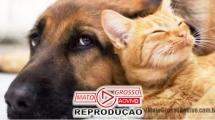 BICHO NÃO É COISA | Senado aprova Projeto de lei que cria natureza jurídica em caso de maus tratos para animais 129