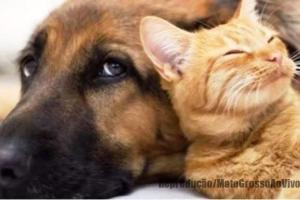 BICHO NÃO É COISA | Senado aprova Projeto de lei que cria natureza jurídica em caso de maus tratos para animais 70