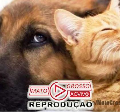 BICHO NÃO É COISA | Senado aprova Projeto de lei que cria natureza jurídica em caso de maus tratos para animais 104