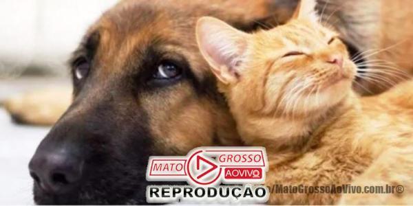 BICHO NÃO É COISA | Senado aprova Projeto de lei que cria natureza jurídica em caso de maus tratos para animais 41
