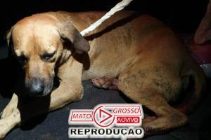 Polícia Civil de Alta Floresta vai investigar autor de disparos com arma de fogo em cachorros da zona rural 86