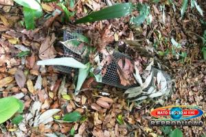 Moradores de Alta Floresta denunciam caçadores de animais agindo em área de preservação ambiental no município 78