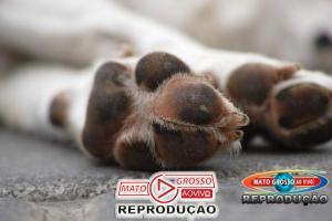 Mulher que denunciou vizinho por som alto encontra cachorro morto em frente ao portão 77