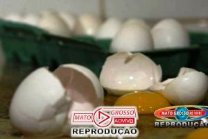 Produção de ovos de galinha bate novo recorde no país, diz IBGE 61