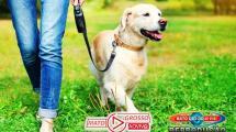 AGORA É LEI | Governo de MT sanciona lei que proíbe circular com cães sem coleira em locais públicos 213